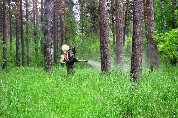 Обработка от клещей лесных массивов в Твери